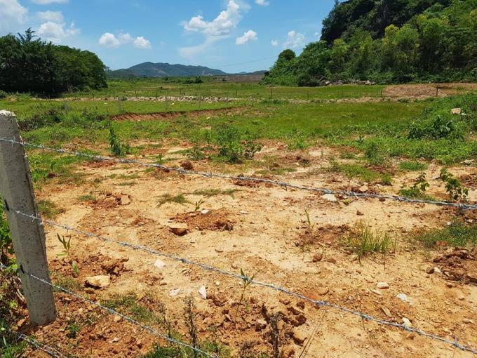 Sau khi tự ý xâm chiếm đất nhiều hộ dân đã tiến hành phá bỏ hàng rào cũ, dựng hàng rào mới trồng cây lên diện tích đất của ông Bách.