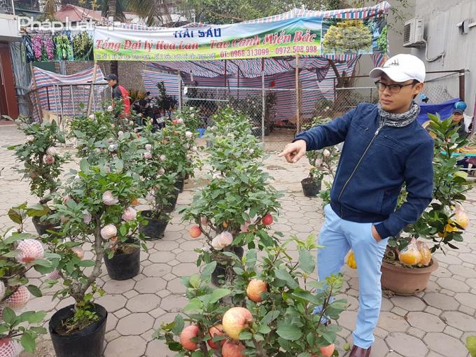 Tham khảo giá tại nhiều địa điểm bán ven đường, mỗi cây Táo bosai có giá từ 1,5 - 2 triệu đồng.