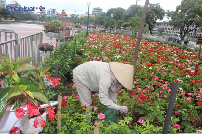 Vườn hoa cũng đang nhanh chóng được hình thành, tạo thành điểm nhấn cho khu vực phố đi bộ Trịnh Công Sơn.