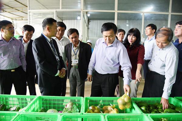 Phó Thủ tướng Vương Đình Huệ thăm mô hình tại HTX nông nghiệp Tiến Huy.