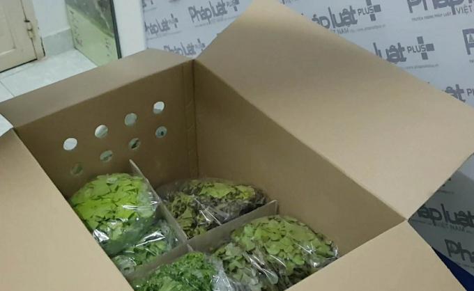 Sản phẩm rau sạch thương hiệu Smart Green khi giao cho khách hàng được đóng gói rất sơ sài khó đảm bảo tiêu chuẩn sạch.