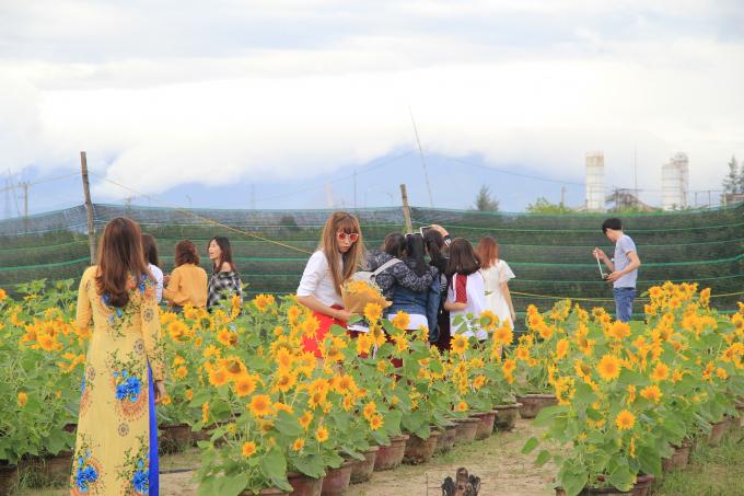 Vườn hoa của ông Vũ đã thu hút sự chiêm ngưỡng của giới trẻ Đà Thành và nhiều khách du lịch tham quan.
