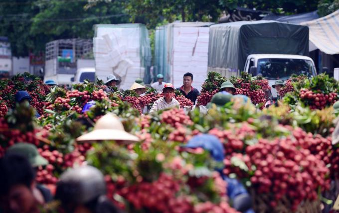 Sản lượng vải thiều năm 2018 trên toàn tỉnh Bắc Giang đạt 215.800 tấn, doanh thu từ vải thiều và hoạt động dịch vụ phụ trợ ước đạt 5.755 tỷ đồng. Đây là sản lượng lớn nhất từ trước đến nay.