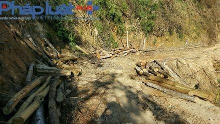 Gỗ rừng bỏ lại khi bị báo chí phát hiện ( Ảnh: Tiến Vũ ).