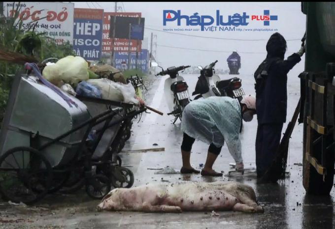 Rác rưởi, xác lợn chết gần nhà hàng Dốc Đỏ, nơi có nhũng món ăn đồng quê (Ảnh: Tiến Vũ)