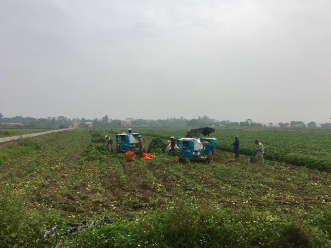 Cầu nối đưa nông sản Việt hội nhập quốc tế
