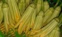 9 tác dụng chữa bệnh 'không thể bỏ qua' của ngọn và hoa bí đỏ