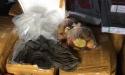 Thừa Thiên - Huế: Phát hiện 1,5 tấn nội tạng bẩn đang vận chuyển đi tiêu thụ