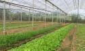 Nở rộ các trang trại nông trại sạch ven Sài Gòn