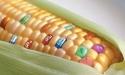 Thực phẩm biến đổi gen có tốt?