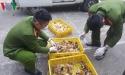 Bắt quả tang gần 7000 gia cầm giống nhập lậu từ Trung Quốc