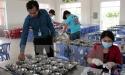Kon Tum: Nhiều bếp ăn trường học không đảm bảo an toàn thực phẩm