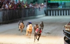 Gỡ vướng Dự án Trung tâm dịch vụ thể thao giải trí đua chó Xuân Thành