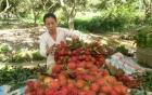 Dừa, chôm chôm sốt giá