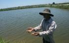 """Huế: Người nuôi trồng thủy sản thất bát vì sản phẩm bị """"rút ruột""""?"""