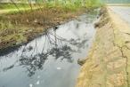 """TP Quy Nhơn: Người dân phường Trần Quang Diệu """"kêu trời"""" vì ô nhiễm môi trường"""
