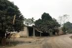 Yên Bái: Người dân khốn khổ bởi Dự án làm đường quy hoạch treo