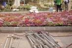 Phá rào, 'vượt dây' chụp ảnh trước thềm Lễ hội hoa anh đào Nhật Bản 2018