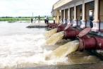 Sản xuất nông nghiệp khó khăn vì mực nước sông Hồng xuống thấp