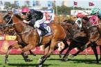 Hướng dẫn kinh doanh đặt cược đua ngựa, đua chó và bóng đá quốc tế