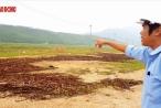 """Gói thầu thuộc Dự án Nhiệt điện Quảng Trạch: Các nhà thầu tố cáo nguy cơ """"thông thầu""""?"""