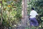 Myanmar: Gian nan cuộc chiến chống...cưa máy