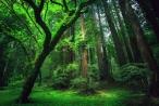 Khi nào nhà nước thu hồi rừng?