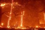 Cháy rừng ở California, ông Trump ban bố tình trạng thảm họa