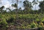 Kiên Giang: Phó chủ tịch HĐND xã bị tố khai man hồ sơ để chiếm đất