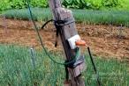 Hà Nội: Đi tìm gà bị mất, một người phụ nữ bị điện giật từ vong