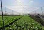 Xuất khẩu nông sản vẫn chưa thể đạt chất lượng và số lượng trong năm 2018