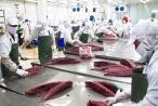 Audio Tài chính Plus: Xuất khẩu cá ngừ sang Chile tăng đột biến