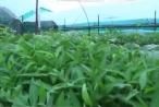 Tái thiết mảng xanh trên quần đảo Trường Sa sau thiên tai