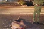 Lâm Đồng: Truy tìm phương tiện gây tai nạn chết người lúc rạng sáng