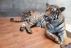 Lâm Đồng: Làm rõ việc du khách nước ngoài 'tố' Khu du lịch thác Prenn ngược đãi thú hoang dã