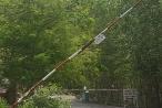 Bình Dương: Vụ gần 10ha rừng phòng hộ Núi Cậu bị cháy, doanh nghiệp 'kêu' tiền hỗ trợ trồng rừng bị 'ém'?