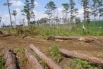 Lâm Đồng: Lập dự án trồng rừng để...phá rừng, bán đất?