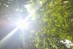 Dự báo thời tiết ngày 20/8: Hà Nội ngày nắng nóng, chiều tối có mưa