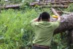 Lâm Đồng: Điều tra, xử lý các vụ phá rừng, hủy hoại rừng có dấu hiệu hình sự