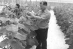 Làm giàu từ áp dụng công nghệ cao vào sản xuất nông nghiệp
