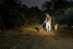 Cận tết, dân trồng bưởi Diễn thả chó, thức trắng đêm chống trộm
