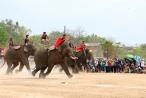 Kỳ thú đua voi ở Buôn Đôn