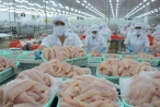 Cá tra Việt Nam bị áp thuế cao kỷ lục tại Mỹ