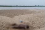 Phú Thọ: Liên tiếp phát hiện 2 thi thể trôi trên sông Hồng