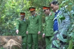 Nhiều cán bộ, chiến sĩ nguy cơ phơi nhiễm HIV khi bắt kẻ trộm cây sưa