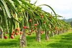 Công ty Nông nghiệp FLC Biscom được chấp thuận đầu tư nông nghiệp công nghệ cao tại Quảng Trị