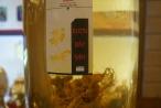 Choáng với 2 bình sâm Ngọc Linh quý giá hơn 15 cây vàng ở xứ Quảng