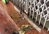 """Hải Phòng: Một gia đình khủng hoảng tinh thần vì """"bom bẩn"""" tấn công"""