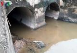 Cá lại chết gần khu công nghiệp Quán Ngang, Quảng Trị