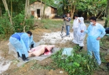 Miền Trung khẩn cấp ứng phó dịch tả lợn châu Phi